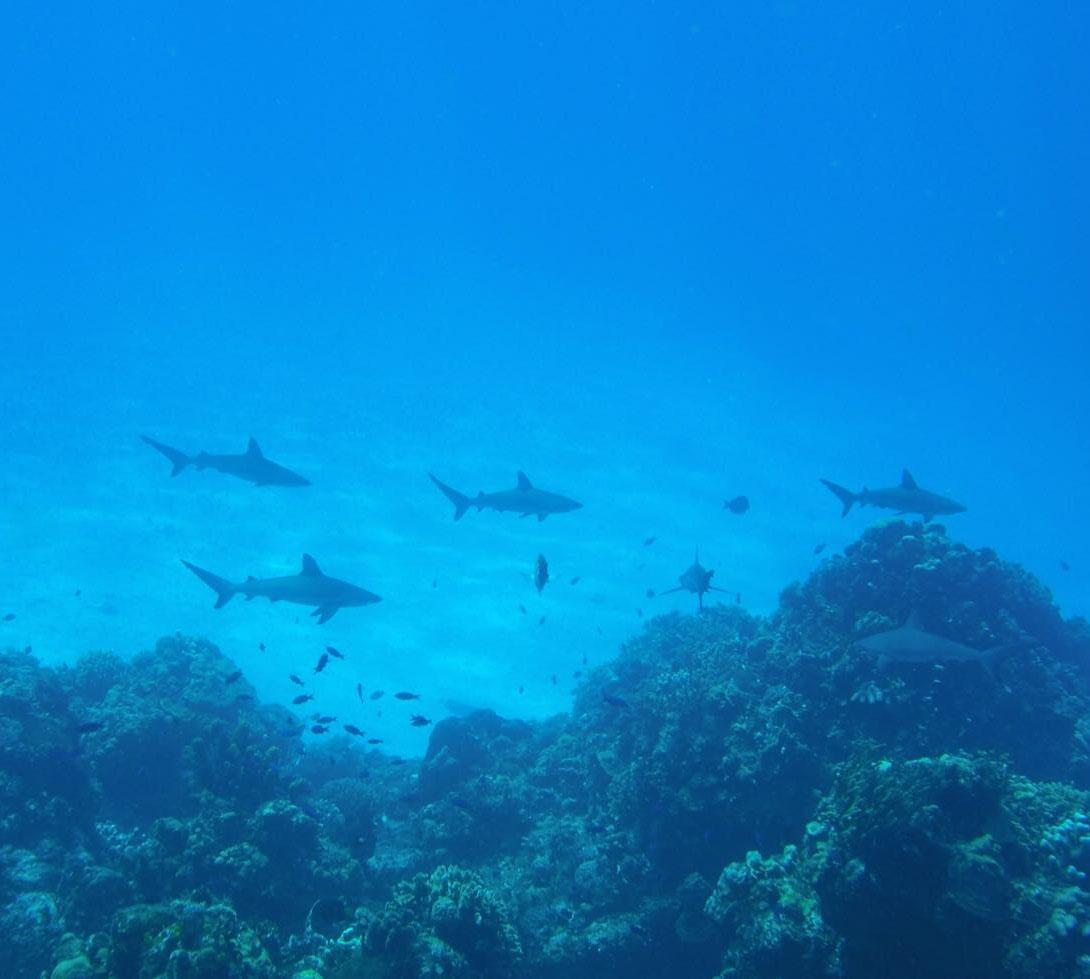 Orcas são avistadas em Ilhabela