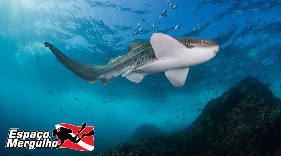 Mergulho na Australia